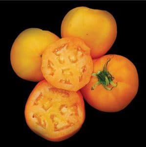 tomate-golden-sunray6