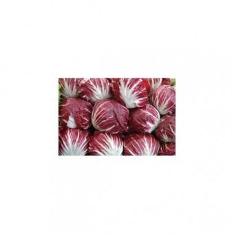 Almeirão Vermelho: 50 Sementes