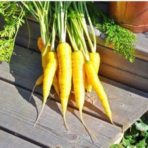 Cenoura Yellow Solar: 50 Sementes