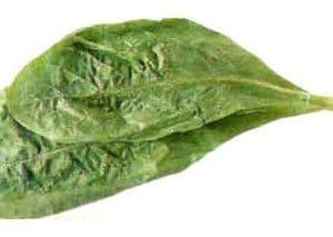 Comprar Sementes de Alface Romana: 50 Sementes