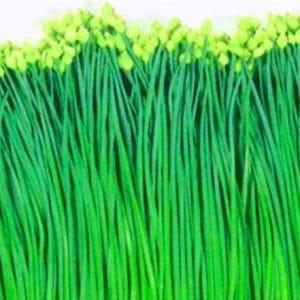 Cebolinha Chinesa (Nirá): 20 sementes