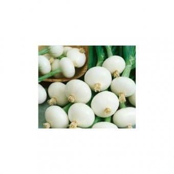 Cebolinha Para Conserva: 20 Sementes