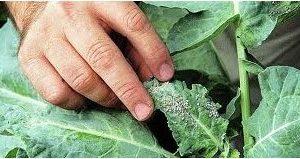 Comprar Inseticida para Plantas Líquido Dimy 20ml