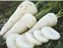 Comprar Sementes Cenoura Branca Lunar