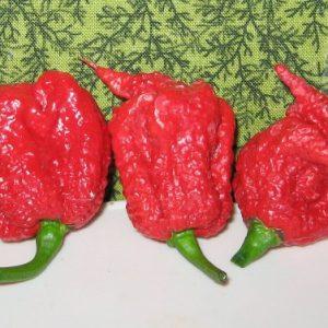 Comprar Sementes de Carolina Reaper (Pimenta Mais Forte do Mundo) www.sementerara.com.br