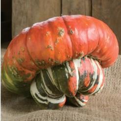 Sementes de Abóbora Turbante Turca (Abóbora Chapéu Mexicano)