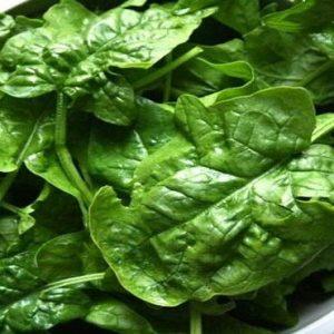 Comprar Sementes Orgânicas de Espinafre Bloomsdale