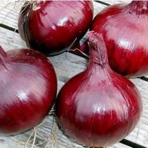 Sementes Cebolinha Ruby Red