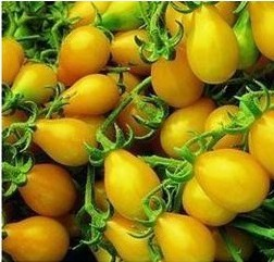 Sementes de Tomate Yellow Plum (Yellow Pear)