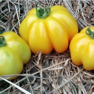 Sementes de Tomate Yellow Stuffer