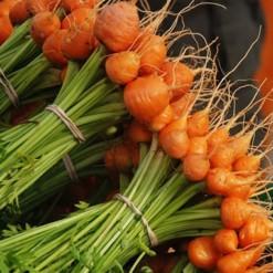 Sementes Orgânicas de Cenoura Redonda Nice