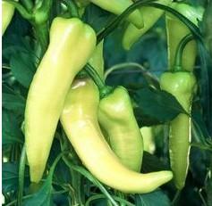 Sementes Pimentão Amarelo Comprido