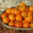 Sementes Tomate Cereja Laranja
