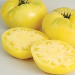 Tomate Great White Beefsteak ORGÂNICO