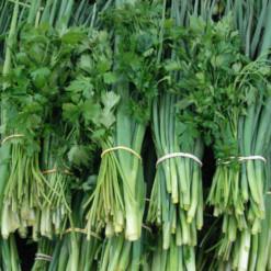 cheiro-verde