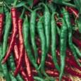 Sementes Orgânicas de Pimenta Cayenne