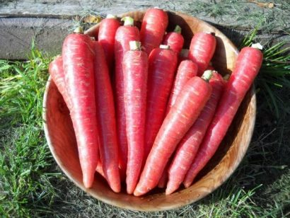Comprar Orgânico Cenoura Atomic Red