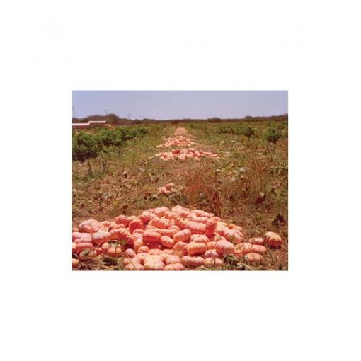 Plantar Sementes de Moranga Exposição (de Mesa)