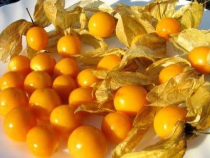 Sementes de Physalis Fruta (Golden Berry)