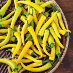 Sementes de Pimenta Cayenne Amarela