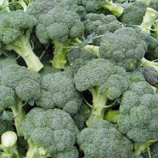 Sementes Orgânicas de Brócolis De Cicco