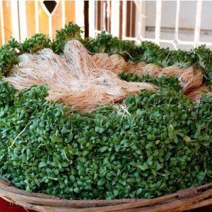 Comprar Sementes de Feno-Grego