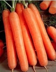 Sementes de Cenoura Nantes