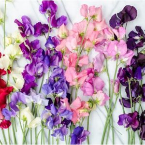 Sementes de Ervilha Cheirosa