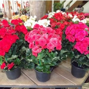 Fertilizante Forth Flores 60ml