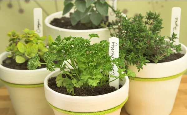 Fertilizante Forth Equilíbrio 60ml