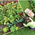 Fertilizante Forth Hortaliças 60ml