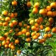 Fertilizante Forth Hortaliças Balde 400g