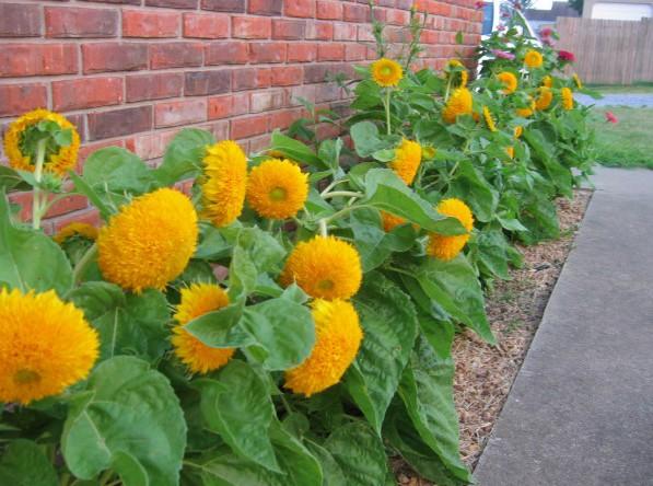 Fertilizante Forth Plantio Balde 400g