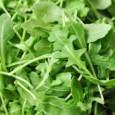 Comprar Sementes Orgânicas de Rúcula