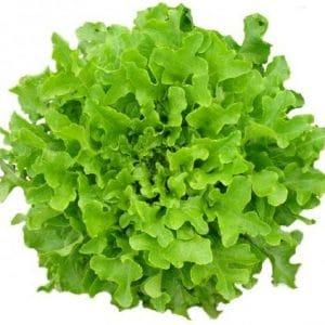 Comprar Sementes de Alface Mimosa Salad Bowl