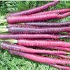 Sementes de Cenoura Cosmic Purple