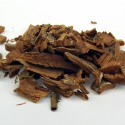 Agoniada Para Chá Plumeria lancifolia