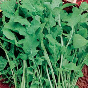 rucula-cultivada-agroecologica