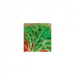 Sementes de Rúcula Cultivada AGROECOLÓGICA