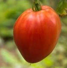 Sementes de Tomate Coração de Boi