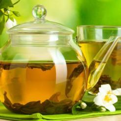 Chá Verde Camellia sinensis