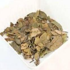 Embaúba Para Chá Cecropia glaziovii