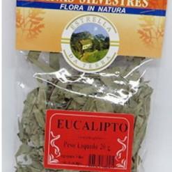 Eucalipto Para Chá Eucalyptus globulus