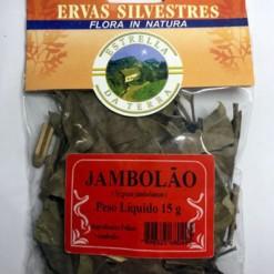 Jambolão Para Chá Syzygium jambolanum