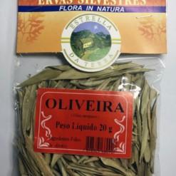 Oliveira Para Chá Olea europaea