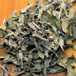 Sálvia Para Consumo Salvia officinalis