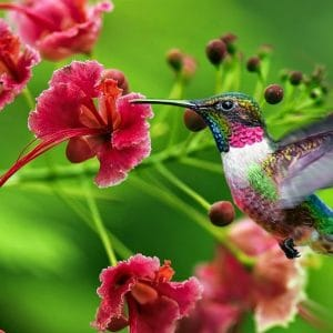 Sementes de Flores