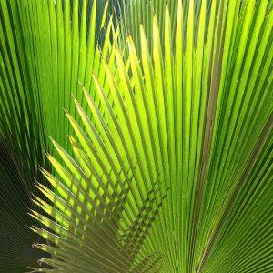 Sementes de Plantas