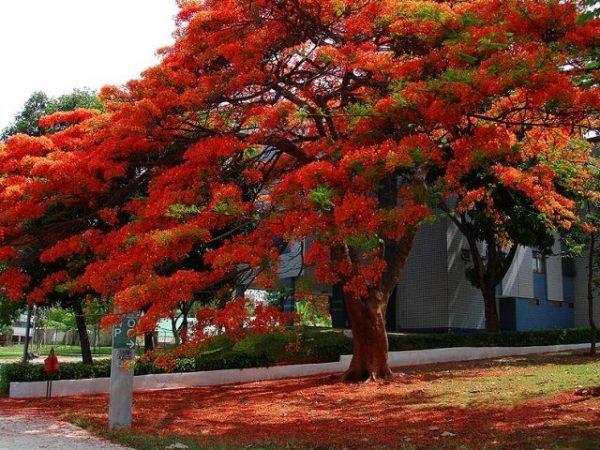 Comprar Sementes De Árvores
