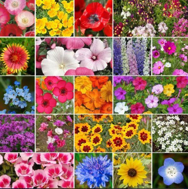 Flores Sortidas 300 Sementes (Até 400 Variedades)